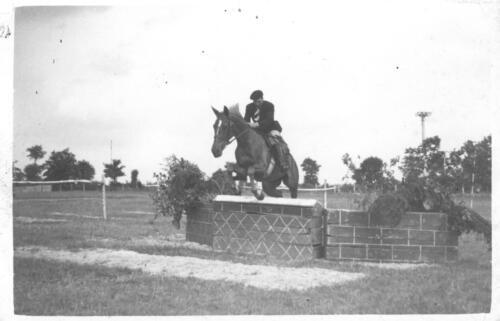 Concours hippique - Un cavalier