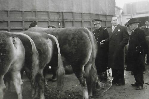 Champ de foire - Comice agricole - Vaches pleines 9ème section (1950-60)