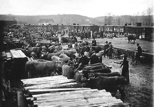 Embarquement des bestiaux à la gare