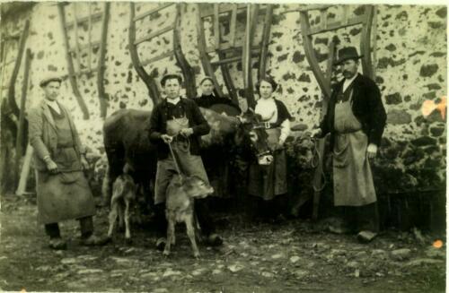 Marsac - Ferme Chabante - Veaux jumeaux (1910)